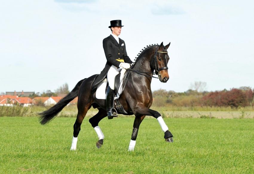 E.H. Herzensdieb, Trakehner stallion