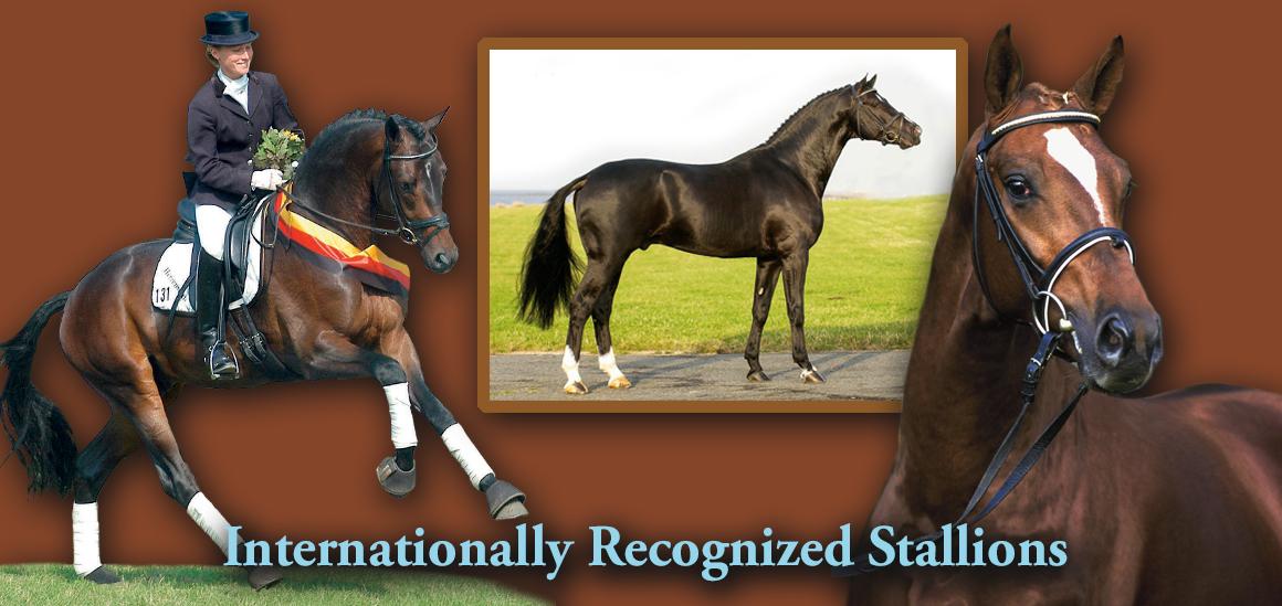 Internationally Recognized Stallions