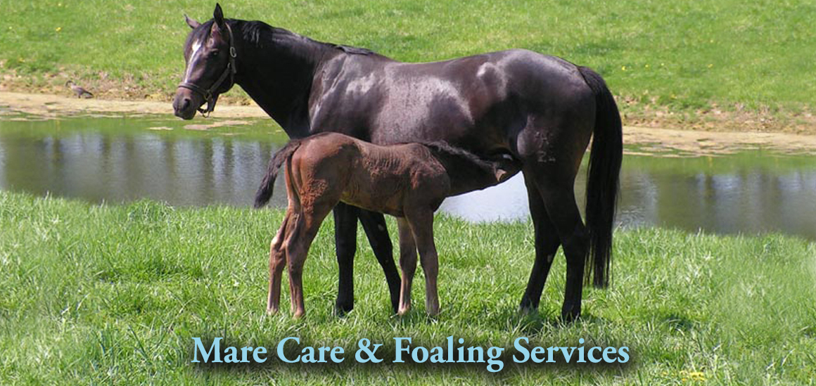 Mare and Foal/Mare Services