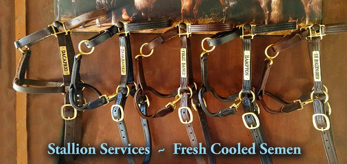 Bridles/Stallion Services